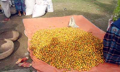 সুপারির বাম্পার ফলন, রপ্তানি হচ্ছে বিদেশে