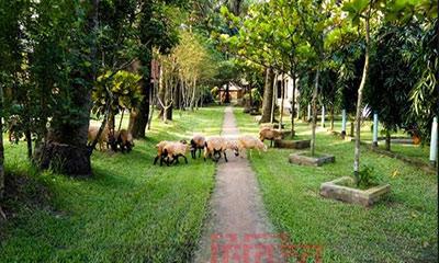 নুহাশ পল্লীর জমি ছাড়তে নোটিশ, বিপাকে হুমায়ূনের পরিবার