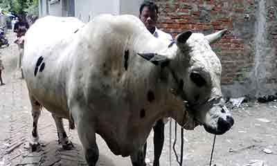 করোনাকালের 'রাজকুমার'