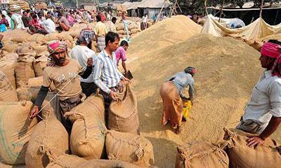 ঠাকুরগাঁওয়ে ধানের মণ ৩২০ টাকা, নীরবে কাঁদছেন কৃষক