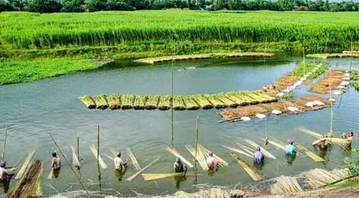 মির্জাপুরে পাটের ফলন ভাল, দামেও খুশি কৃষক
