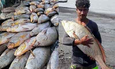 ৮১টি পোয়া মাছ বিক্রি হলো ৪০ লাখে