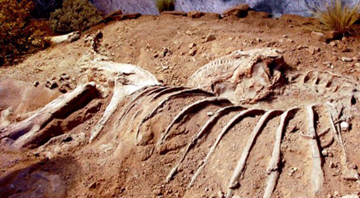 বিশ্বের সবচেয়ে বড় ডাইনোসরের সন্ধান